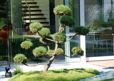 efh_bad_hall_gestaltung-mit-bonsai-in-bad-hall