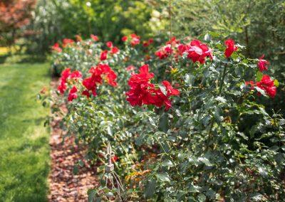 efh_badhall1_rote-blumen-mit-grünen-pflanzen_1280x820