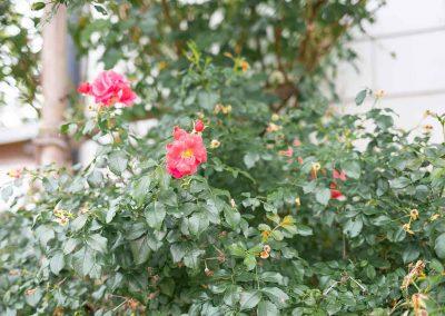 efh_badhall2_rote-blumen-in-pflanzen_1280x820