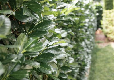 efh_badhall3_grüne-pflanzen_128x820