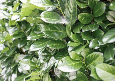 efh_badhall3_grüne-pflanzen_von-vorne-1280x820
