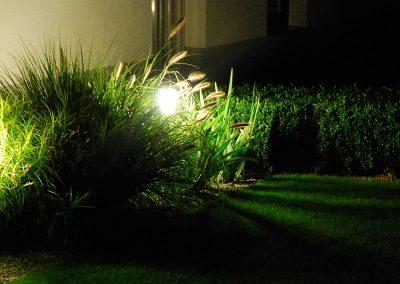 efh_molln_stimmungsvoll-beleuchtete-pflanzen