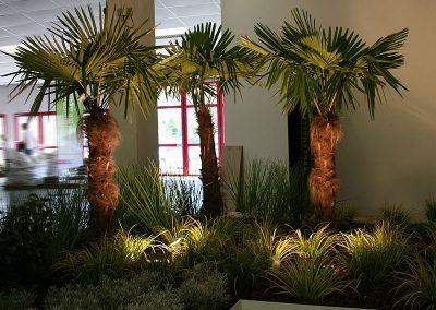 messe_wels_2011_beleuchtete-palmen-in-abendstimmung